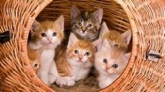 Czytaj więcej: Kotki oddam w dobre ręce